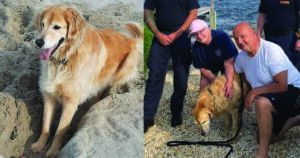 Dog Lost For 2 Weeks Discovered Tired But Alive In New Jersey Swamp