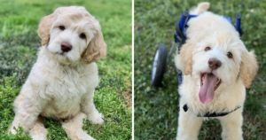 Playful Puppy With Spinal Deformity Walks For The First Time