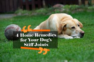 4 Home Remedies for Your Dog's Stiff Joints