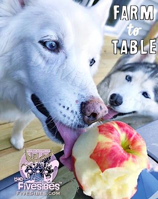 Canine Cooking Corner: Autumn Apples!