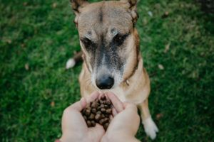 Top 3 Dog Foods That Have Never Been Recalled