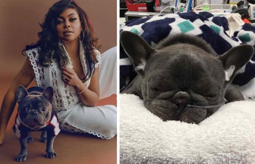 "Taraji P. Henson ""A Wreck"" After Her Frenchie Passes"