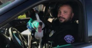 K9 For A Day: Shelter Dogs Go On Patrol
