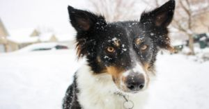 HELP: Make It Illegal To Leave Your Dog Out In The Cold!