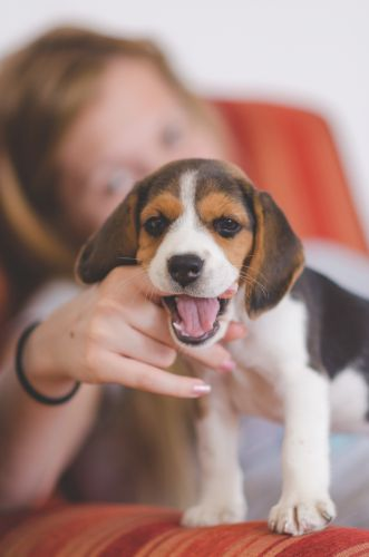9 Top Dog Behavioral Problems And How To Solve Them