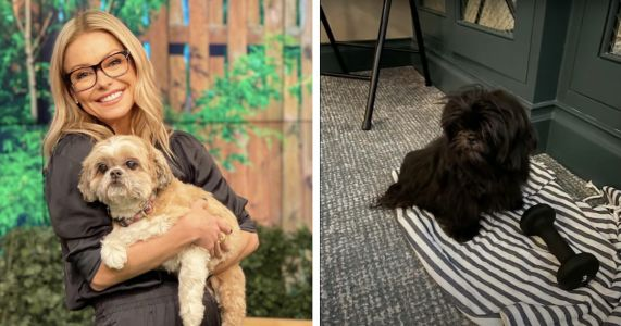 Kelly Ripa's Family Can't Agree On New Rescue Dog's Name