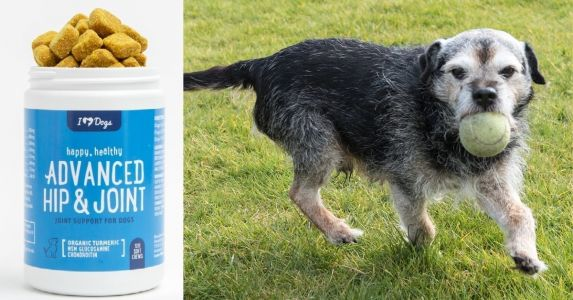 Try One of the Most Popular Canine Joint Pain Supplements for Under $15