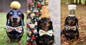 Instagram-Famous Dachshund Can Balance Almost Any Object On His Head