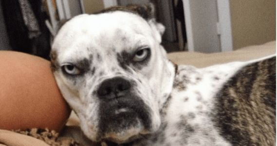 10 Dogs Who Are Having A Terrible Day And Want You To Know It