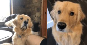 Dog Hilariously Shames His Dad For Not Sharing His Snack