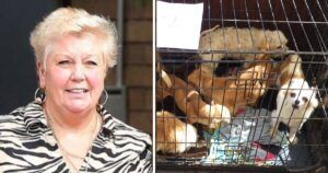 Breeder Convicted Of Cruelty To 110 Dogs, Cats & Tortoises Loses Her Appeal