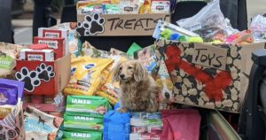 Dachshund Helps Dogs In Need For Her Birthday