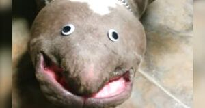Putting Googly Eyes On A Pittie's Chin Makes A Hilarious Creature