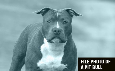 2017 Dog Bite Fatality: Woman Mauled to Death by Her Pet Pit Bull in Alsip, Illinois