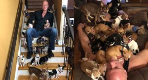 Heartbroken Man Who Was Saved By A Dog Now Lives With Over 30 Rescued Tiny Dogs