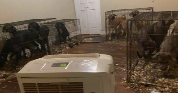 Landlord Attacked After Exposing Horrific Puppy Mill In Tenant's Apartment