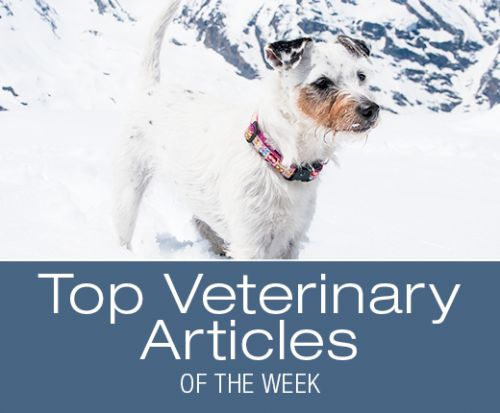 Top Veterinary Articles of the Week: CBD Oil and Dog Cancer, and more