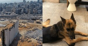 Journalist Describes Losing Her Dog In Beirut Explosion