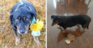 Not All Rescue Dogs Make Remarkable Transformations - And That's OK!