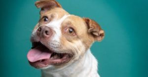 This Adoptable Dog Shows How Sad Beginnings Can Still Have Happy Endings