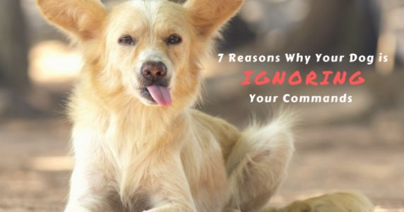 My Dog Ignores Me: 9 Reasons Why
