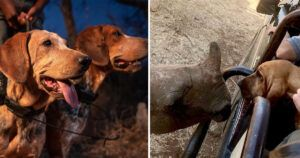 45 Endangered Rhinos Protected By Specially Trained Dogs