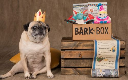 Which Dog Subscription Box Is Best?