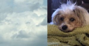 Grieving Woman Gets Sign That Late Dog Is Watching Over Her