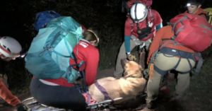 Stranded 190-Pound Mastiff Rescued From Hiking Trail in Utah