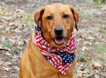 5 Ways to Keep Your Dog Safe During Fireworks infographic