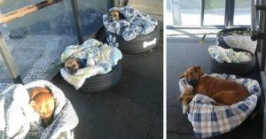 Brazil Bus Station Provides Strays With Shelter From The Cold