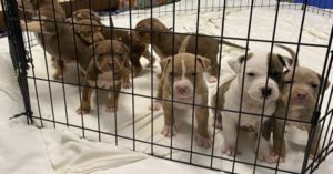 Dog Leads Woman On Late Night Adventure In Hopes Of Saving Her Puppies
