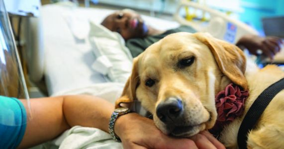 Children's Hospital Gets A Dog to Comfort Their Patients