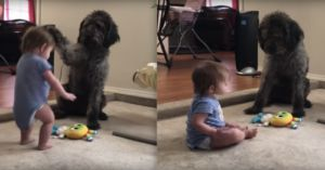 Bossy Dog Teaches Toddler How To Sit