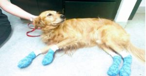 Vet Issues Warning After Treating Dogs For Severely Burned Paws