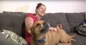 Finally Ready To Adopt, Woman Finds The Dog She Lost Years Ago