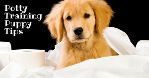 Potty Training Puppy Tips