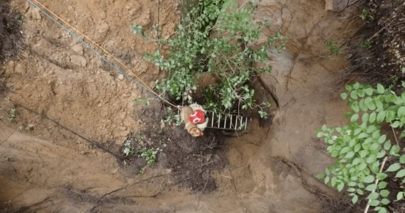 Florida Dog Stuck In 40-Foot Sinkhole Cries For Help