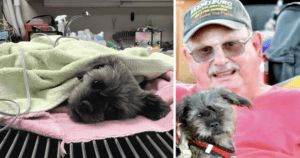 Recovering Man Is Overjoyed When Dog Lost After Car Crash Is Found