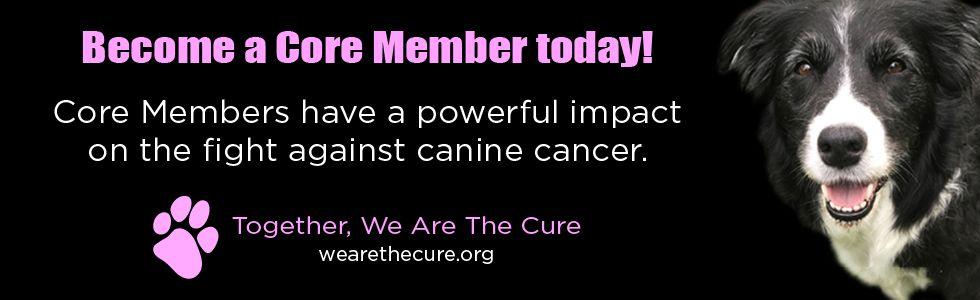 Dispelling the Myths and Misconceptions About Canine Cancer Treatment