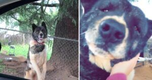 Woman Visits Lonely Chained Dog For Years Until She Finally Gets To Set Her Free