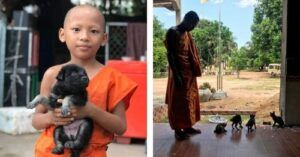 Amber Abroad: Part 4 - Cambodian Monks Caring For Abandoned Animals At Pagodas
