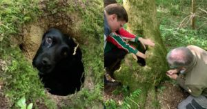 """""""Luckiest Dog"""" Rescued After Being Trapped In Tree Root Overnight"""