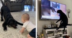 Dog Jumps For Joy When He Recognizes Himself On TV