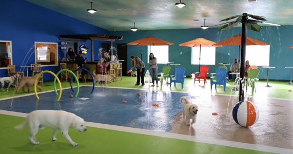 Country's First Indoor Dog Water Park Is Approved By Pampered Pups