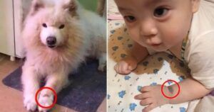 Dog Mom Discovers That Her Baby Has The Same Birthmark As Her Late Dog