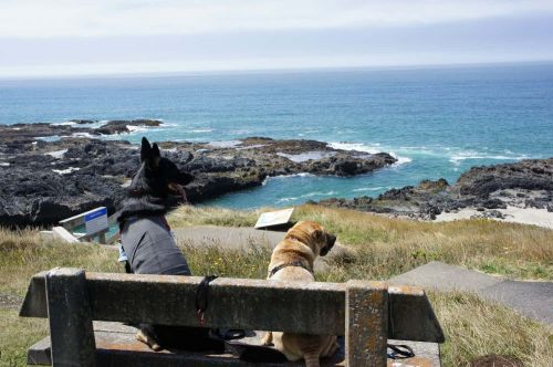 Dog Friendly Day Trips from Florence, Oregon