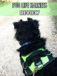 Review: Pug Life All-In-One™ No Pull Dog Harness