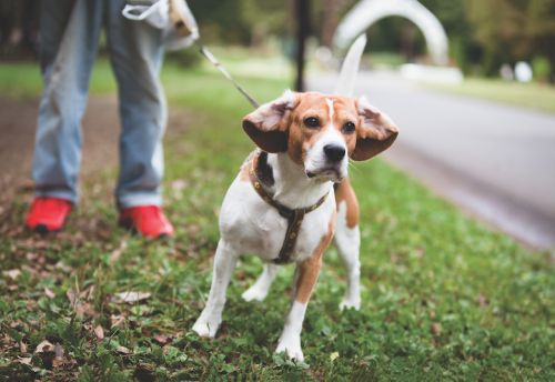 Does Your Dog Have an Anxiety Issue?