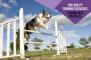 Dog Agility Training Exercises: Training With Obstacles